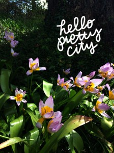 flowers basking in sunlight with the words hello pretty city written on them nearby
